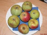Doberaner Äpfel